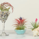DIY Planters for Air Plants | Dollar Store Decor